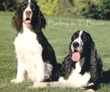Bailey and T-Bone