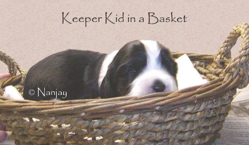 Keeper Kid in a Basket