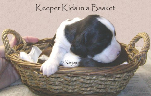 Keeper Kids in a Basket