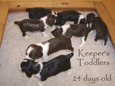 Keeper Kids 3 1/2 weeks old