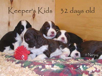 Keeper Kids 4 1/2 weeks old