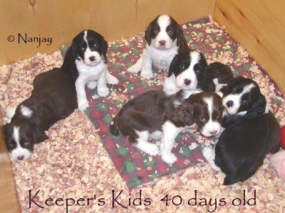 Keeper Kids 6 weeks old