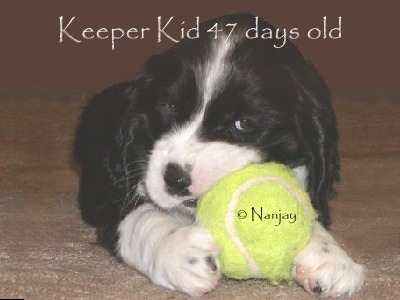 Keeper Kids 7 weeks old