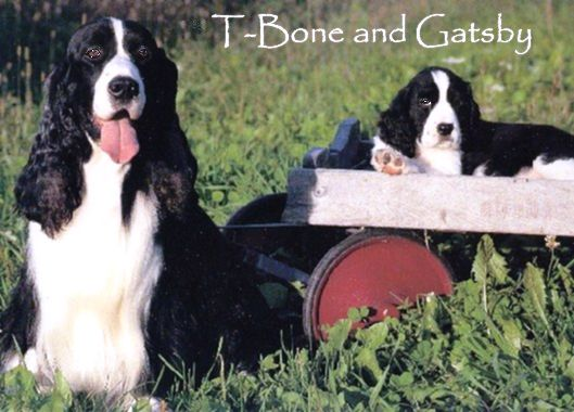 T-Bone and Gatsby